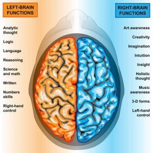Left & Right Brain Functions